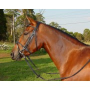 Cant-a Eventing Bridle Raised Hanoverian Noseband