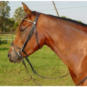 Cant-a Bridle Hanoverian with Chain Browband